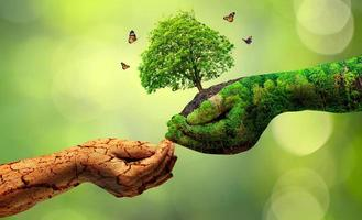 environment Earth Day In the hands of trees growing seedlings Bokeh green Background Female hand holding tree on nature field grass Forest conservation concept photo