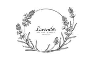 Lavender flower and leaf hand drawn botanical illustration with line art vector