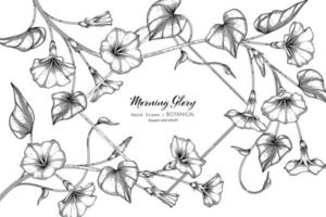 Morning glory flower and leaf hand drawn botanical illustration with line art vector