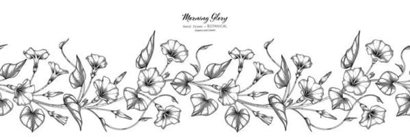 Seamless pattern Morning glory flower and leaf hand drawn botanical illustration with line art vector