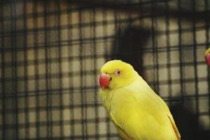 pájaro loro amarillo foto