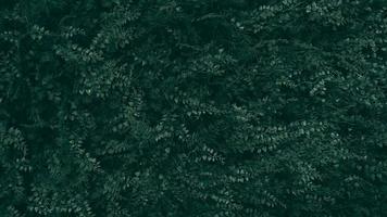 Tropical fake plastic green leaf Dark tone photo