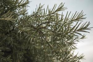 arbusto de espino amarillo al atardecer fondos de pantalla foto