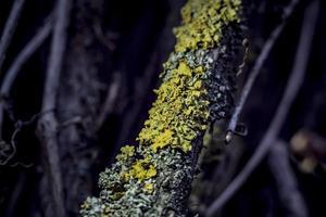 Liquen en una vid en un bosque lluvioso de cerca foto