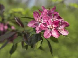 flor de sakura y papel tapiz foto
