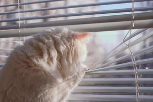 the cat looks out the window photo