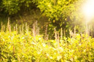Nature backdrop Beautiful Meadow photo