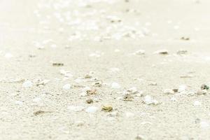 Sea shells on sand of  Summer beach photo
