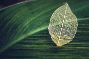 White transparent skeleton leaf photo