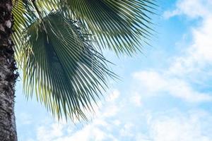 Closeup on green palm tree leaf on beautiful photo