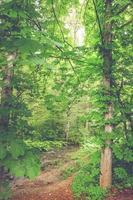 fondo verde fresco de la naturaleza foto
