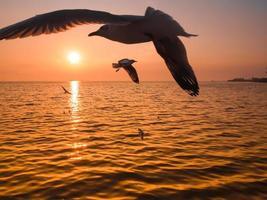A sea bird seagulls flies off into the amazing sunset photo
