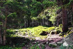 agua en el bosque foto