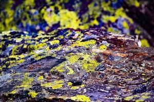 Yellow moss on rock photo