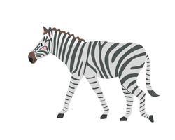 Cute zebra on white background in cartoon flat style Vector illustration