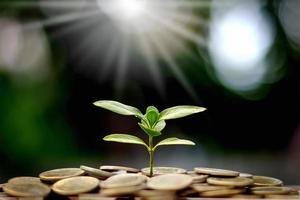 The saplings that grow on the pile of coins include the white light flooding the trees photo