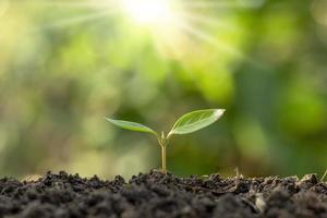 The seedlings grow from fertile soil and the morning sun shines photo