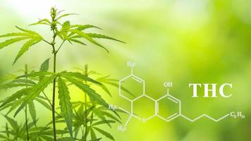 THC cannabis wallpaper for medical purposes photo