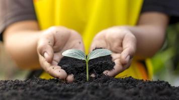 Primer plano de una mano humana sosteniendo una plántula, incluida la plantación de plántulas, el concepto del día de la tierra, la campaña de reducción del calentamiento global y la gestión del equilibrio ecológico. foto