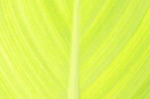 Green leaf abstract background texture photo
