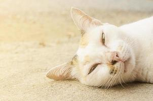 Cat sleeping on the ground photo