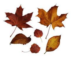 hojas de los árboles de otoño aisladas sobre fondo blanco foto
