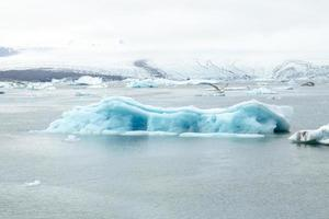 Icelandic iceberg and a northern fulmar photo