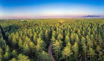 Evergreen forest in early fall photo
