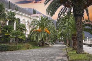 Callejón de palmeras en el terraplén de Gagra en Abjasia foto