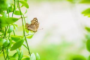 Butterfly background with nature photo
