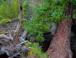 Forest scene along Jack Creek west of Camp Sherman OR photo