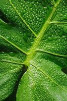 Macro de hoja verde con gotas de agua foto