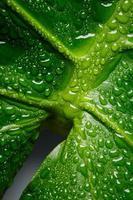 Macro de hoja de monstera verde con gotas de agua foto