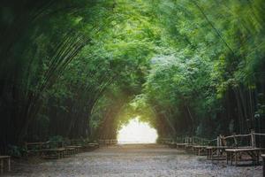 fondo del túnel de bambú foto