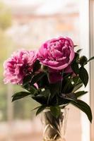 ramo de peonías rosas brillantes en la ventana foto