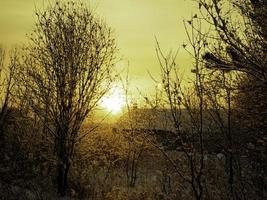 The sun is rising in the trees photo