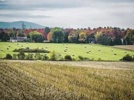 Harvests in autumn photo