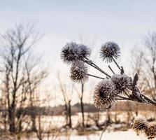 The winter plants of my land photo
