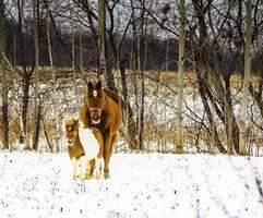 un caballo y su amigo foto