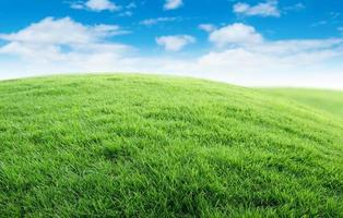 Green grass with blue sky photo