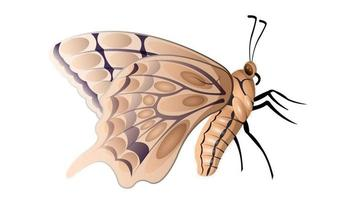 Butterfly isolated side view vector