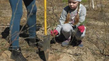 uma garotinha plantando uma árvore video