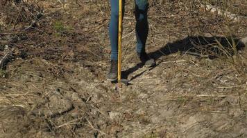 plantando mudas de árvores para restauração video