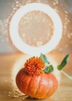 composición de otoño de calabazas y flores foto