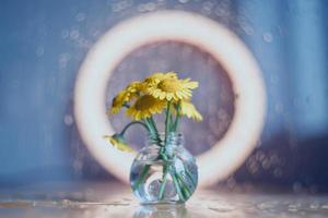 Yellow daisies in a glass vase photo