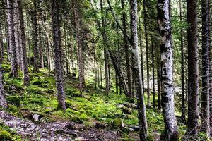 bosque de pinos durante el día foto