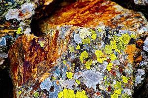 musgo y óxido foto
