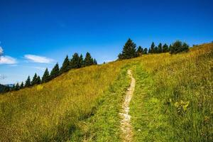 Hiking path during the day photo