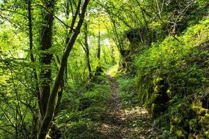 Spring path with green trees photo