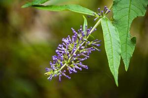 flores silvestres moradas en el bosque foto